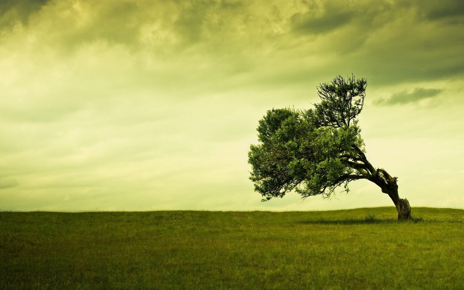 Τώρα μας ενδιαφέρει το δάσος της Kεντροαριστεράς και όχι το δέντρο. Του Γιώργου Μεντζελίδη